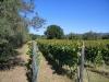 vigna-foto-scheda-vino-15-ottobre-2011-ore-12-30-050